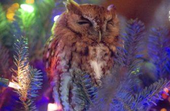 O familie a procurat un Pom de Crăciun în care se ascundea o bufniță